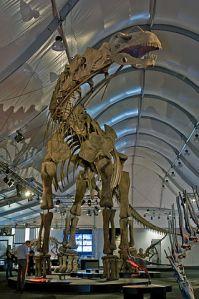Photo 5: Argentinosaurus