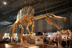 Photo 6: Spinosaurus