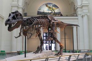 Sue t-rex dinosaur - Connie Ma